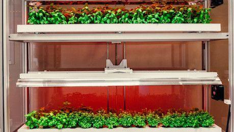 Fazenda vertical reduz necessidade de água na agricultura