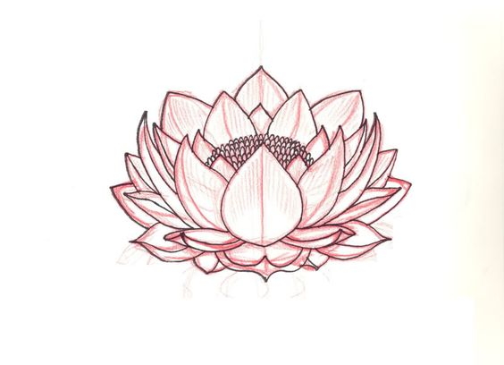 lotus sketch pictures images and photos tattoo