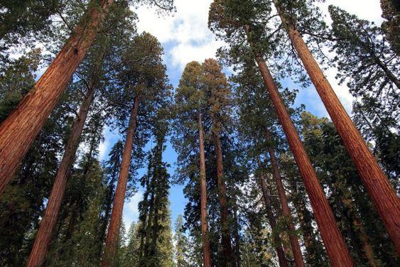 Sequoia National Park - Tulare County, California USA