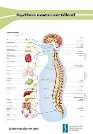 """Résultat de recherche d'images pour """"chiropractie et santé"""""""
