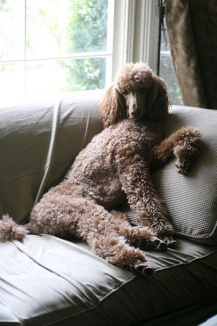 (8) IOL Webmail :: Dá uma olhada nestas ideias para o teu álbum Animais