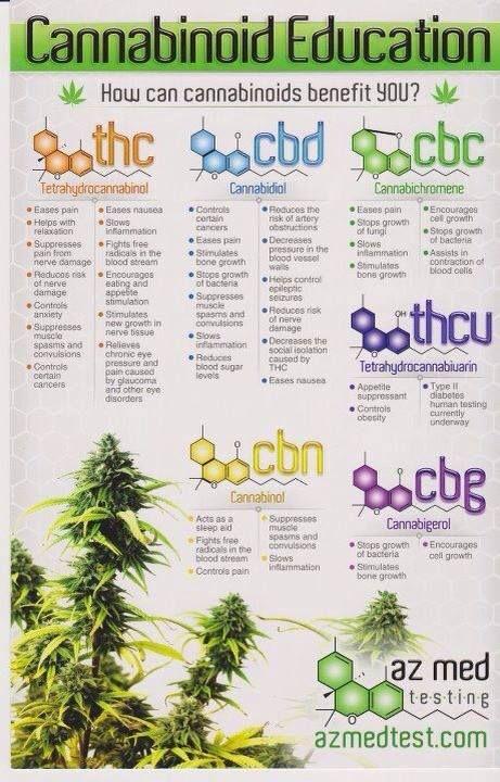 Know the facts of #marijuana  http://spliffseeds.nl/blue-medi-kush-female-cannabis-seeds-detail