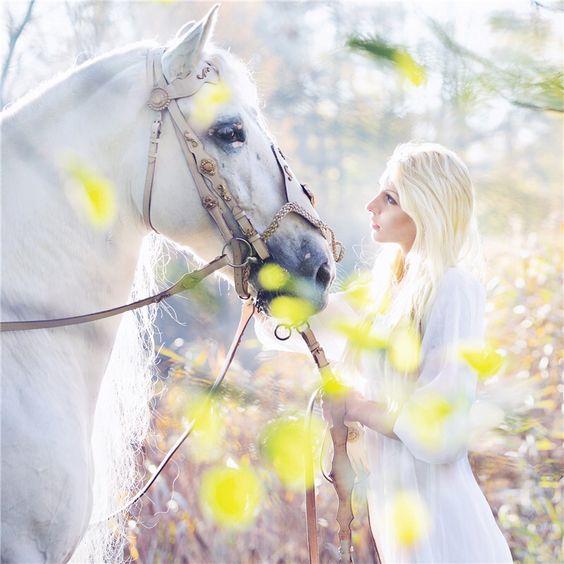 Gold Stallion -Luxus für Reiter & Pferd