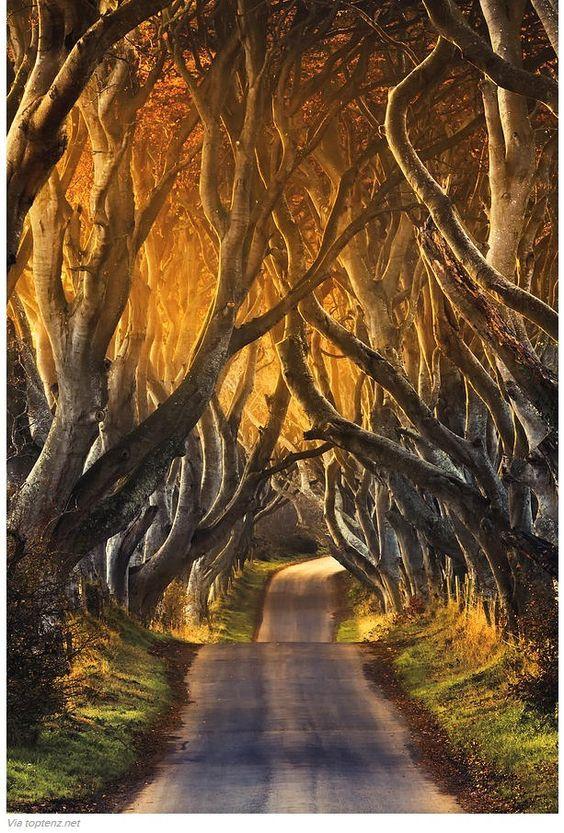 Des photos splendides d'arbres de la forêt enchantée. Branches, troncs ou racines