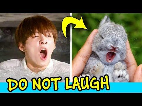 Jungkook Being Bunny Try Not To Laugh Challenge Youtube Try Not To Laugh Jungkook Cute Bts Funny Videos