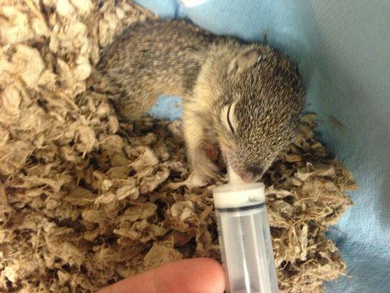 Megacurioso - Fé na humanidade: veja a recuperação desse esquilinho encontrado congelando