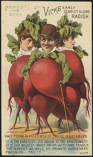 Newest and best. Vick's early scarlet globe radish. Only found in Rices box of choice vegetables.