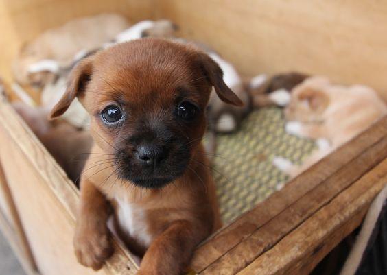 coisinha fofa :D #dog