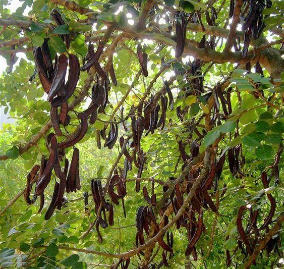 lista de plantas silvestres comestibles