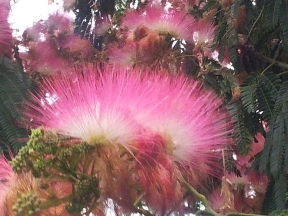 aldor florido
