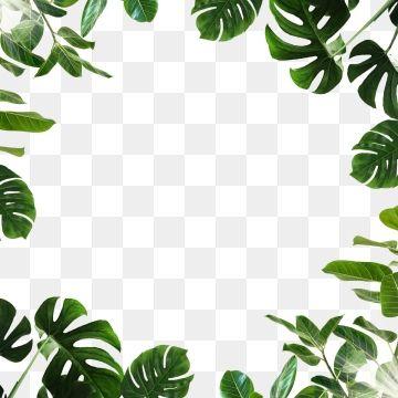 Tropical Leaf Monstera Green Png And Psd Bunga Tropis Poster Bunga Seni Dinding Buatan Sendiri
