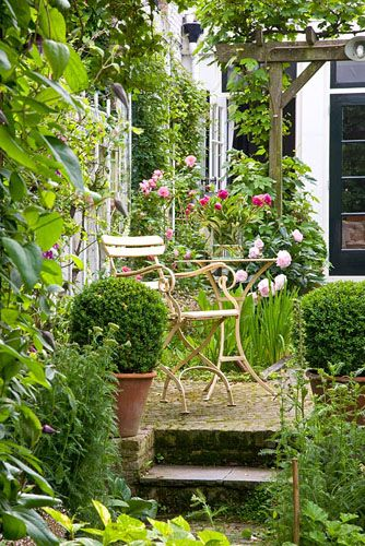 Raised seating area and pergola in courtyard garden with clipped Buxus standards in pots - © Elke Borkowski/GAP Photos