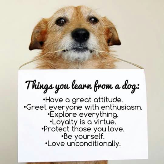 Thinhs you learn from a dog: