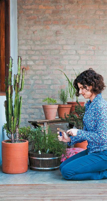 Como cultivar uma horta medicinal em casa - Casa