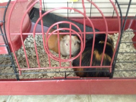 My Piggies Relaxin'