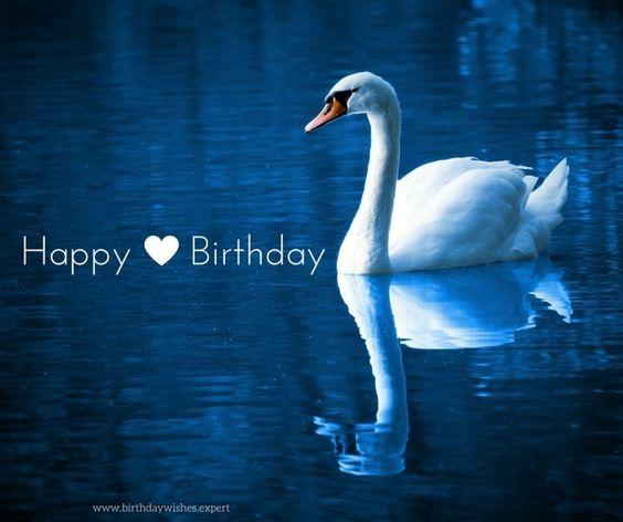 Happy Birthday Swan:
