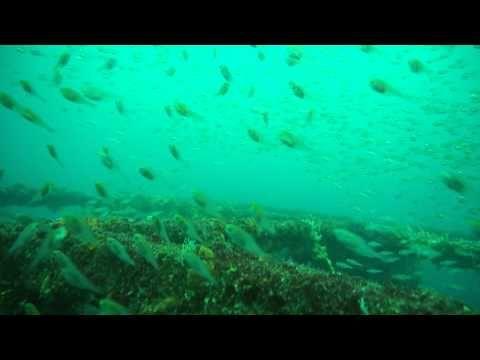 様々な小魚の種類が一緒の初島でダイビング