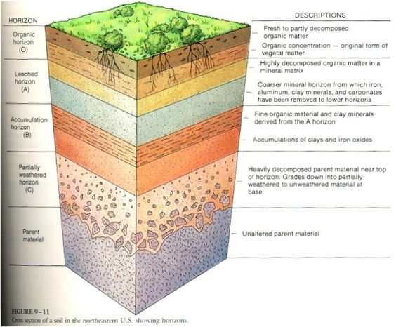 types of soil and uses soil profile diagram for school soil layers diagram