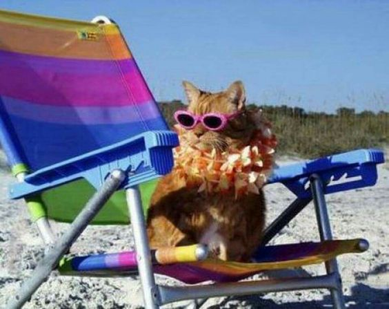 A Day At the Beach !