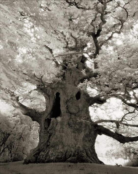 Beth Moon's stunning images capture the power and mystery of the world's remaining ancient trees: