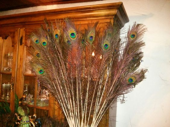 Order them on line ..... Nicer feathers nicer price :0)