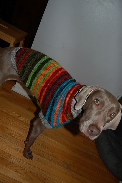 Ravelry: Rainbow Pooch Sweater pattern by Caron International Yarns