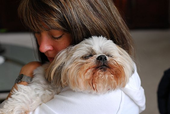 Shih Tzu hug is the best