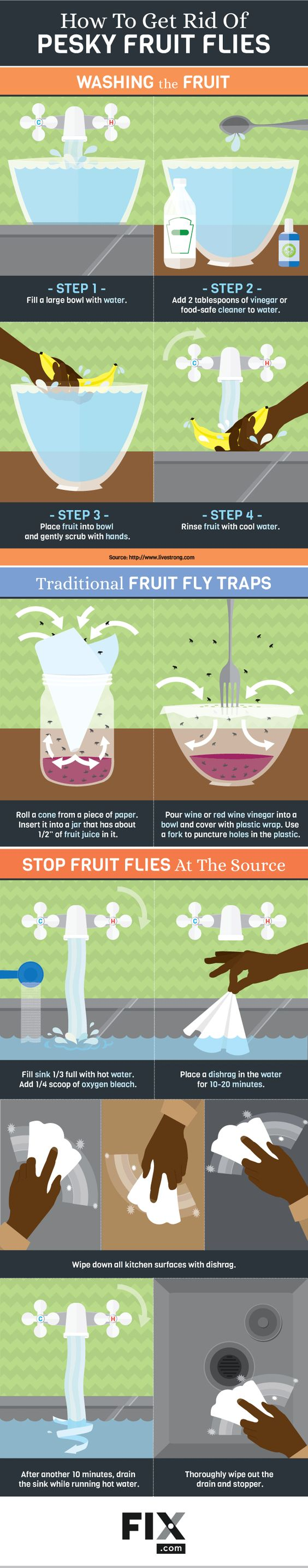 How to Really Get Rid of Pesky Fruit Flies #infographic #HowTo #Food