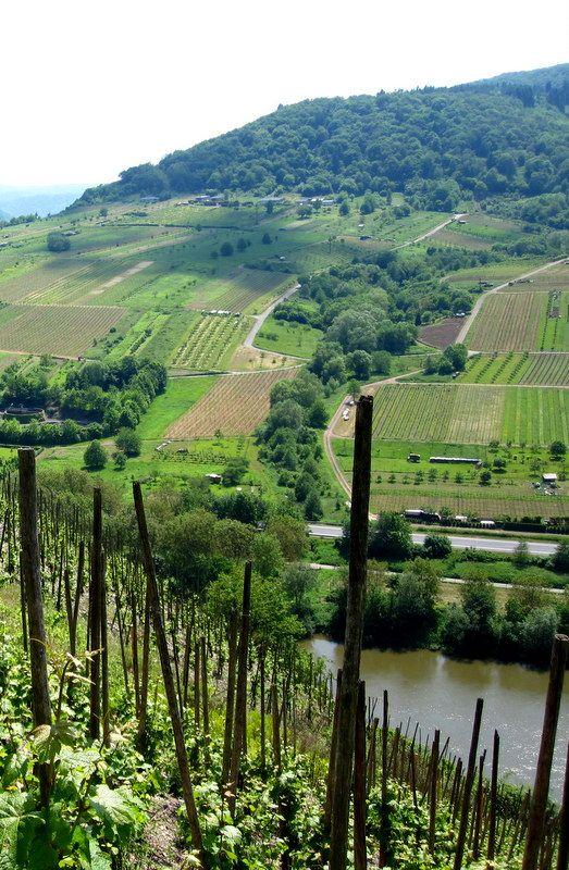 Mosel River vineyards... Germany