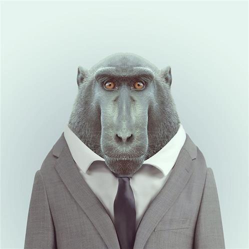 """Yago Partal dans sa série """"Zoo Portraits""""."""