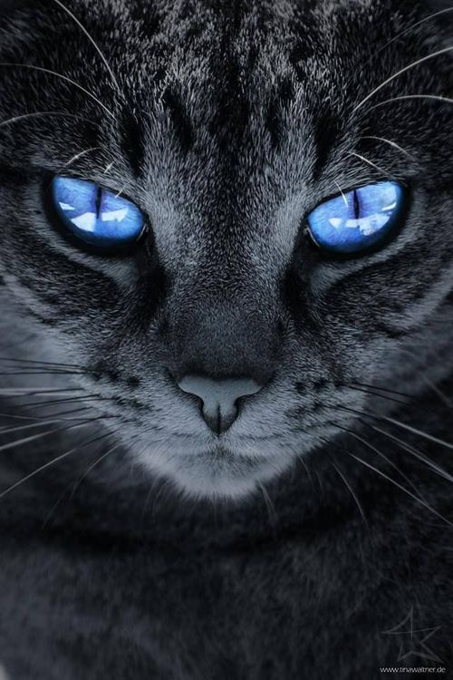 Love the blue eyes!