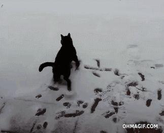 cat gif   Gato ve la nieve por primera vez