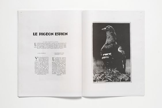 RORHOF : THE PIGEON PHOTOGRAPHER