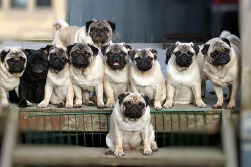 PUG Party..