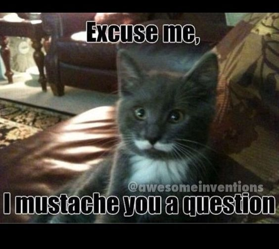 Cats:))
