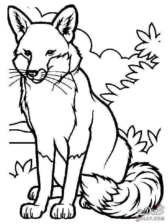 رسومات ثعلب لتلوين الاطفال2019 فوكس للتليوين والطباعة صور ثعالب للاطفال Fox Coloring Page Animal Coloring Pages Animal Coloring Books