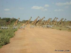 6 Days Masai Mara/Lake Nakuru/Amboseli