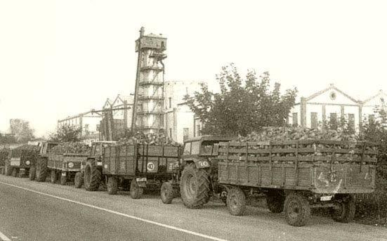 Azucarera 1980