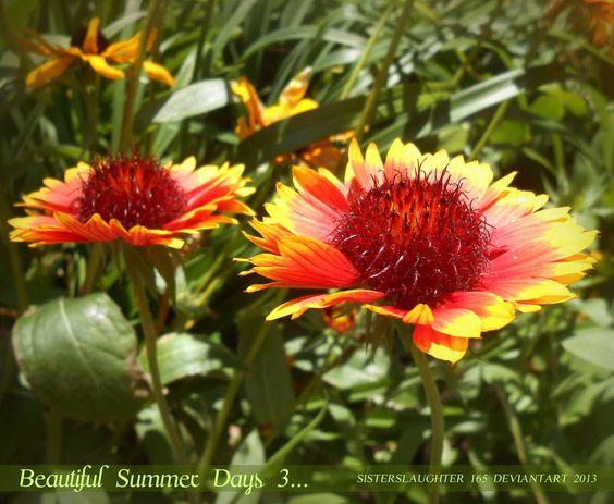 Beautiful Summer Days 3... by Sisterslaughter165.deviantart.com on @deviantART