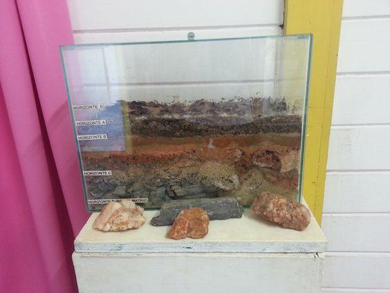 Projeto de estudos ambientais promovido pela escola da natureza.
