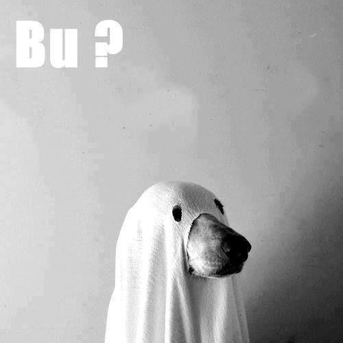Bu??? te asuste?.