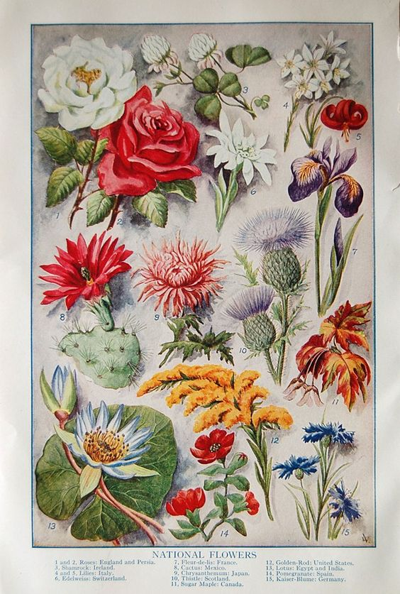 Vintage Full Color 1920s Floral Fine Art Prints of State Full Bloom Spring Summer Flowers