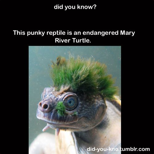 Do want: Punk Rock, Funny Animals, Green Mohawk, Punk Turtle, Rock Turtle