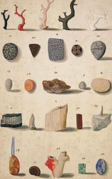 Corals, patterned stones, fossils, ivory from David Freedberg's The Eye of the Lynx: Galileo, His Friends, and the Beginnings of Modern Natural History