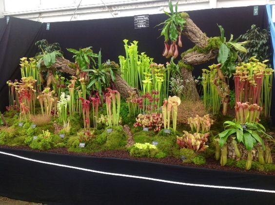 Hampshire carnivorous plants- would make the coolest terrarium