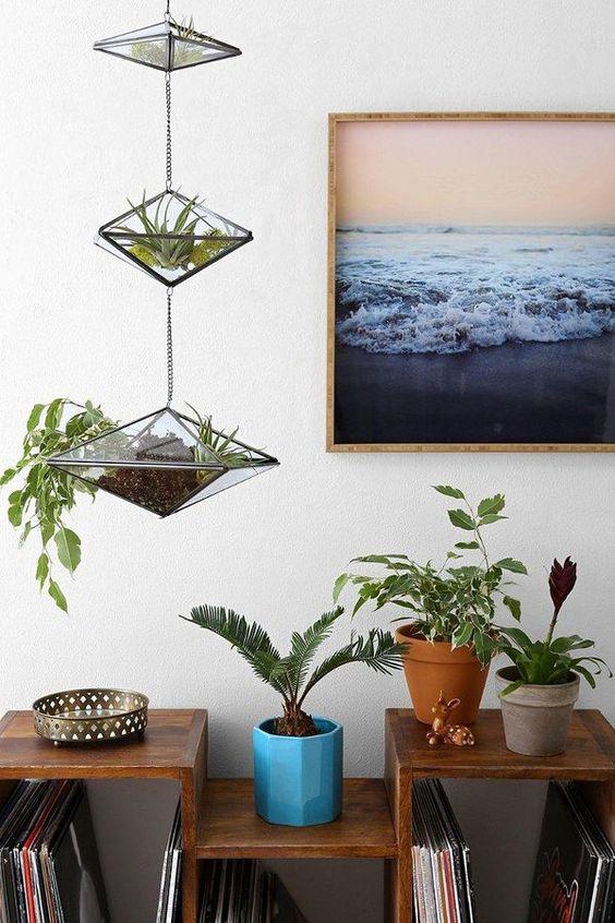 terrário, plantas penduradas