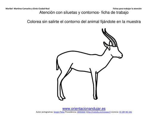 imagen dibuja por dentro del contorno estos animales salvajes siguiendo la muestra 2