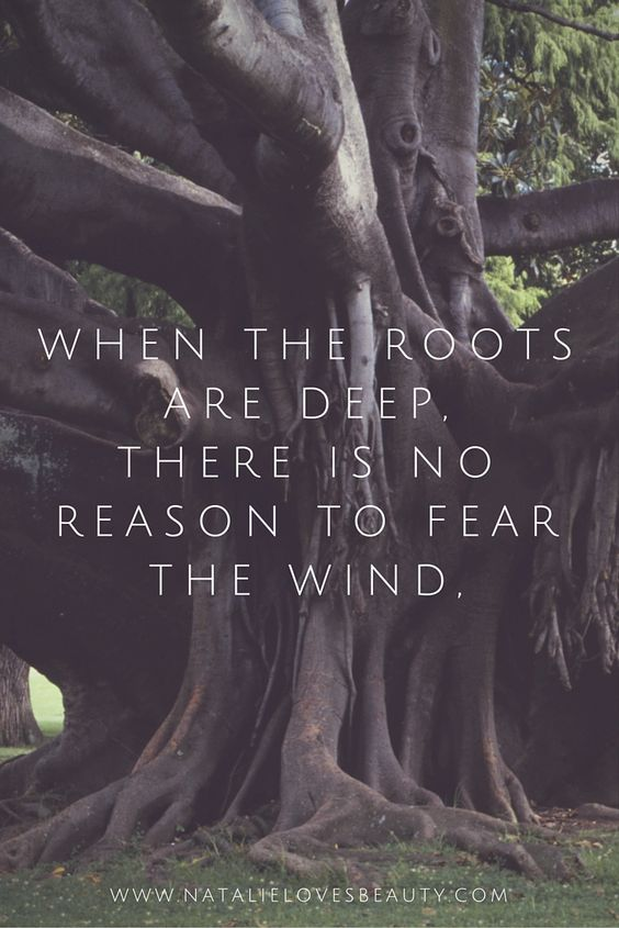 When the roots are deep, there is no reason to fear the wind. #quote #quoteoftheday #inspiration <3