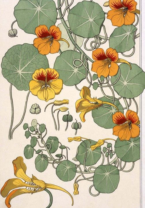 Nasturtiums, by Eugene Grasset (1845-1917), from Plants and Their Applications to Ornament. Chromo-lithograph. London, England, 1897.