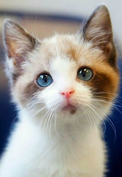 Look At That Face! - Click to see loads of great pictures of cats and kittens to brighten your day.